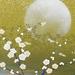 9/27 京都府立植物園 名月観賞の夕べ2015