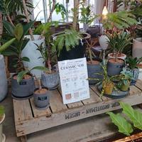 7/29(月)ラジオカーリポートは、観葉植物COTOHAさん:画像