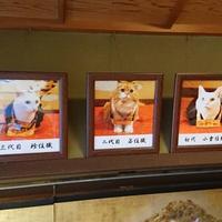11/25(月)ラジオカーリポートは、猫猫寺さん:画像