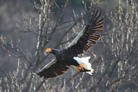 湖北野鳥センター開設30周年(2)