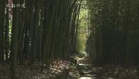 竹のある風景(1)