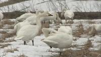 湖北野鳥センター開設30周年(1)