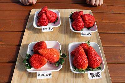 2202102_yumeoibito_s006_002.jpg